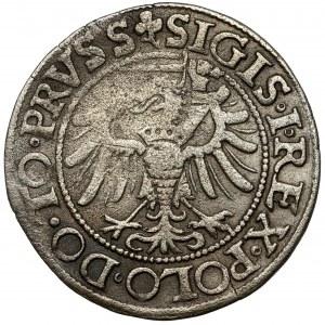 Zygmunt I Stary, Grosz Elbląg 1539 - tarcza bez szpica