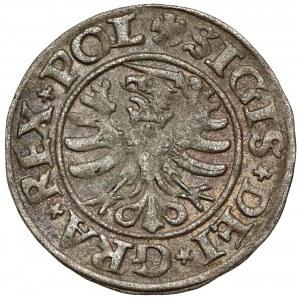 Zygmunt I Stary, Szeląg Gdańsk 1530