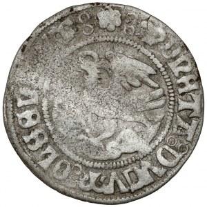 Śląsk, Albert i Karol Ziębicki, Grosz Oleśnica (~1505) - b.rzadki