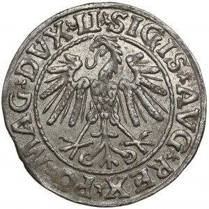 Zygmunt II August, Półgrosz Wilno 1547