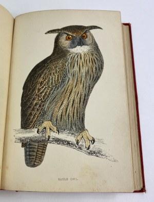[Barwne tablice z ptakami drapieżnymi] Morris Francis Orpen, History of British Birds vol I