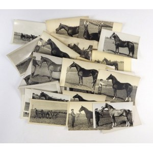 [KONIE - fotografie sytuacyjne]. [l. 40. XX w.?]. Zestaw 42 fotografii form. pocztówkowego.