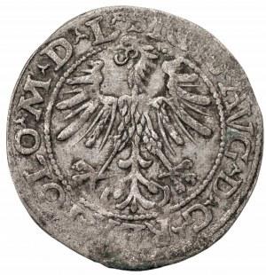 Zygmunt II August (1545-1572) - półgrosz 1557 L/LITVA
