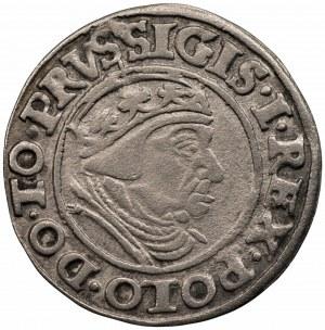 Zygmunt I Stary (1506-1548) - Grosz Gdańsk 1538 - PRVS•