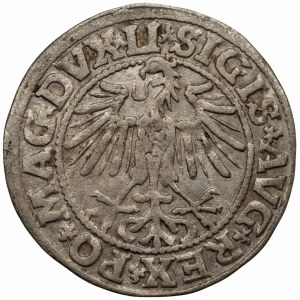 Zygmunt II August (1545-1572) Półgrosz Wilno 1549 - LI/LITVA