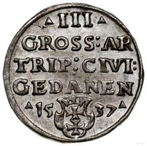 Trojak, 1537, mennica Gdańsk; końcówka na awersie PRVSS...