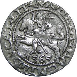 Zygmunt II August, półgrosz 1565, Wilno, rzadka odmiana LIT (RR)
