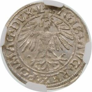 Zygmunt II August, Półgrosz 1548, Wilno – rzymska I, L/LITVA