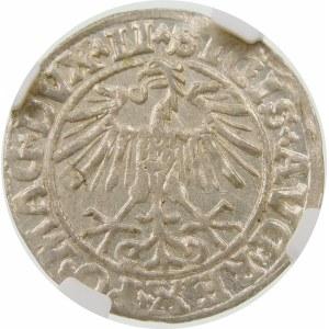 Zygmunt II August, Półgrosz 1550, Wilno – LI/LITVA