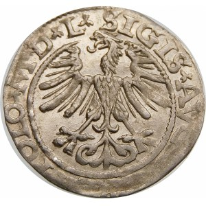Zygmunt II August, Półgrosz 1565, Wilno – Herb Topór – L/LITV