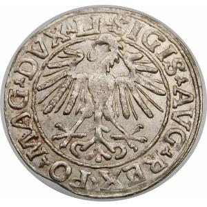 Zygmunt II August, Półgrosz 1548, Wilno – rzymska I, LI/LITVA