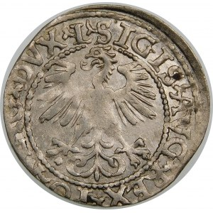 Zygmunt II August, Półgrosz 1560, Wilno – DVX L/LITV