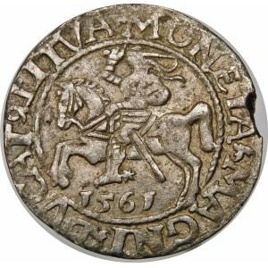 Zygmunt II August, Półgrosz 1561, Wilno – LI/LITVA