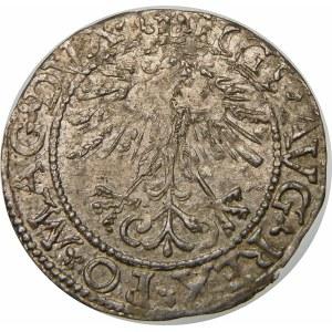 Zygmunt II August, Półgrosz 1562, Wilno – Ogon opuszczony – DVX L/LITVA