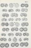 Dannenberg Herman, Monety pomorskie w średniowieczu