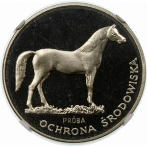 Próba 100 złotych 1981 Koń - nikiel