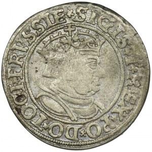 Zygmunt I Stary, Grosz Toruń 1534 - PRVSSIE