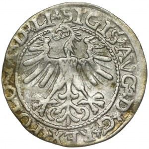 Zygmunt II August, Półgrosz Wilno 1563 - LI/LITV