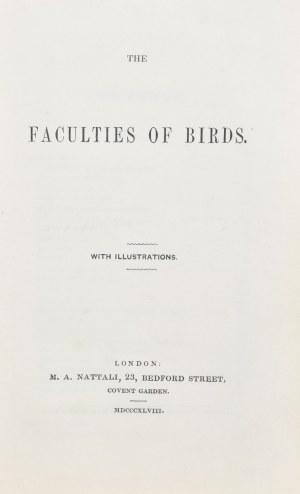 Rennie James - The Faculties of Birds.