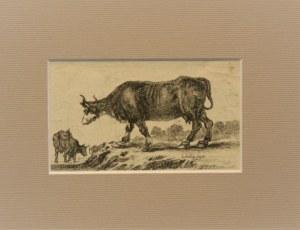 Bella Stefano della (1610-1664) - Krowy