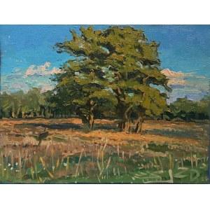 Sławomir J. Siciński, Studium drzew