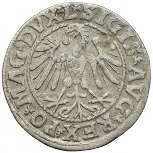 Zygmunt II August, półgrosz 1546, Wilno