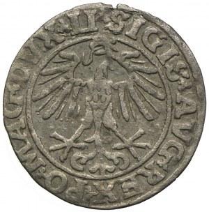 Zygmunt II August, półgrosz 1551, Wilno