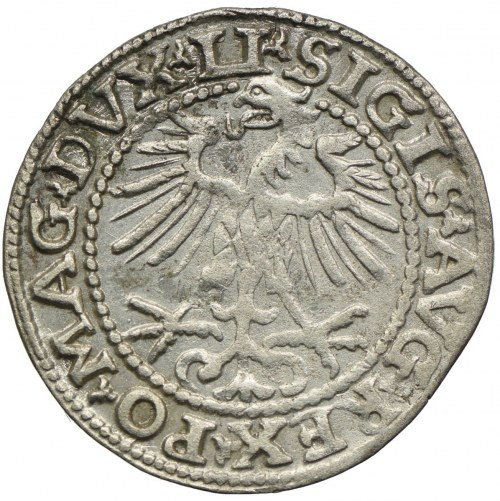 Zygmunt II August, półgrosz 1552, Wilno