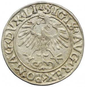 Zygmunt II August, półgrosz 1556, Wilno