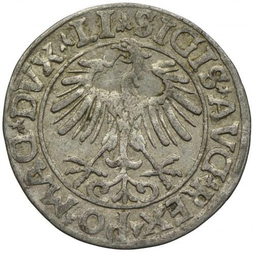Zygmunt II August, półgrosz 1557, Wilno