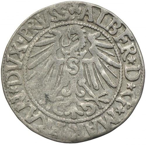 Prusy Książęce, Albert Hohenzollern, grosz 1545, Królewiec