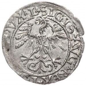 Zygmunt II August, półgrosz 1562, Wilno, L/LITV
