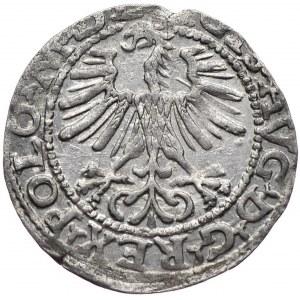 Zygmunt II August, półgrosz 1564, Wilno