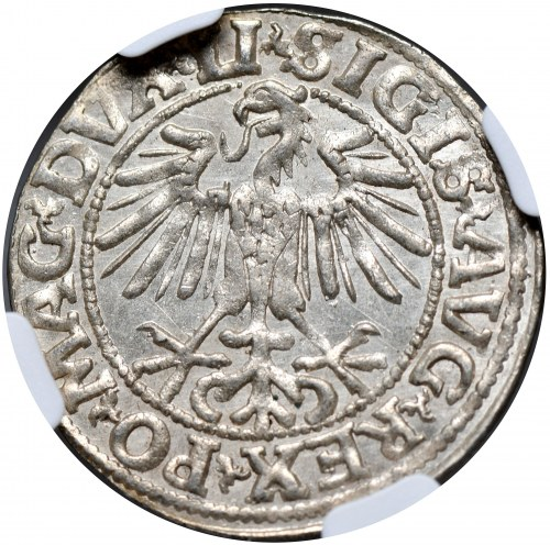 Zygmunt II August, półgrosz 1549, Wilno