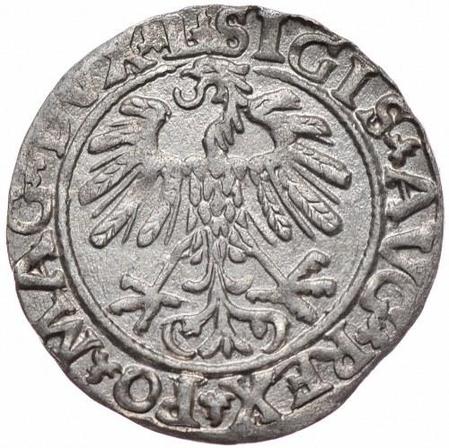 Zygmunt II August, półgrosz 1559, Wilno, L/LITVA