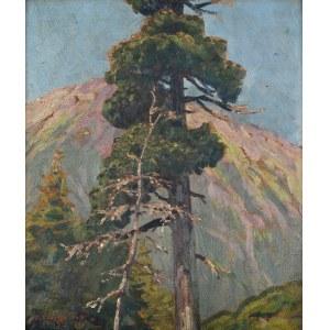 Zefiryn ĆWIKLIŃSKI (1871-1930),