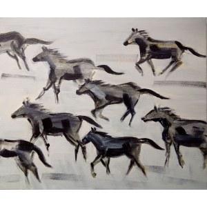 Katarzyna Kostecka, Dzikie konie