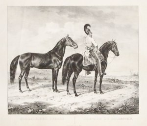 HOLSZTYN. Koń holsztyński; rys. Kuntz, 1830, lit. J. Velten, pochodzi z: Abbildungen saemmtlicher Pf ...