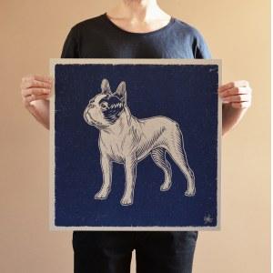 Bartosz Kosowski, Boston Terrier