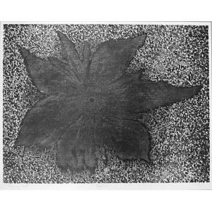 Henryk Opałka, Słoneczny kwiat, 1996