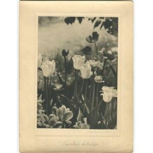 fot. artystyczna 03. CHOMĘTOWSKA Zofia - L'amateur de tulipes