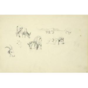 Włodzimierz TETMAJER (1861 – 1923), Szkice pasących się krowy i kozy , 1907