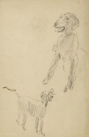 Józef Mehoffer (1869 Ropczyce - 1946 Wadowice), Szkic psa