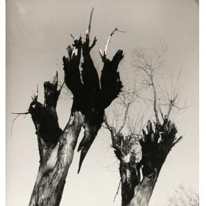 Henryk HERMANOWICZ (1912-1992), Zestaw 3 fotogramów