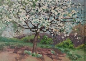 Teodor ZIOMEK (1874-1937), Kwitnące drzewo