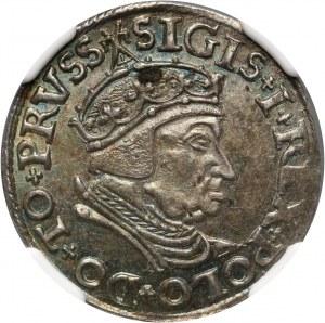 Zygmunt I Stary, trojak 1538, Gdańsk