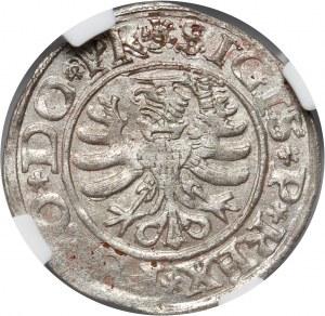 Zygmunt I Stary, szeląg 1530, Elbląg