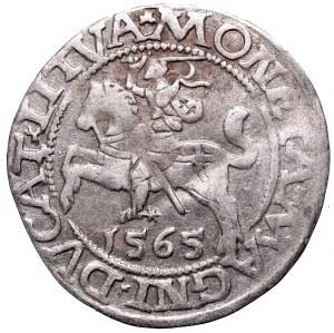 Zygmunt II August, półgrosz 1565, Wilno - bez herbu Topór, RRR