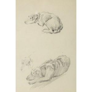Józef Mehoffer (1869 Ropczyce - 1946 Wadowice), Szkice psów