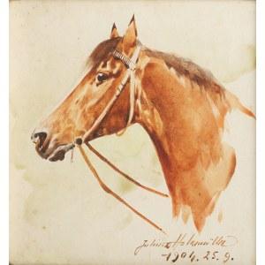 Juliusz Holzmüller (1876 Bolechów – 1932 Lwów), Głowa konia, 1904 r.